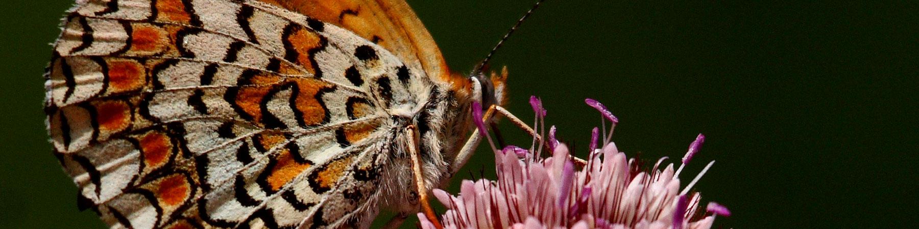 mariposa-slider